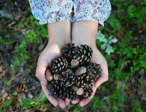 Cônes et gland sur la paume En bois d'automne Image stock