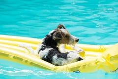 C?o que flutua em um colch?o em uma piscina imagem de stock royalty free