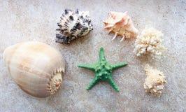C?scaras hermosas del mar y una estrella de mar imagenes de archivo