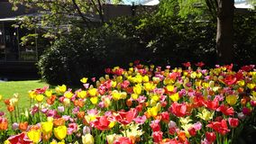 C?sped fresco con las flores almacen de video