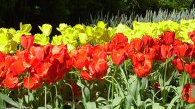 C?sped fresco con las flores almacen de metraje de vídeo