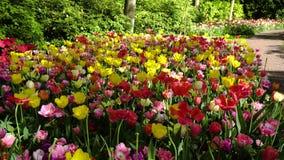 C?sped fresco con las flores metrajes
