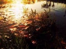 Côté d'un étang Photo libre de droits