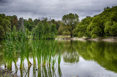 Côté de l'étang Photographie stock