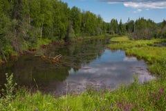 Côté de lac, Alaska , été Photos libres de droits