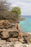 Côte érodée du Curaçao photo libre de droits