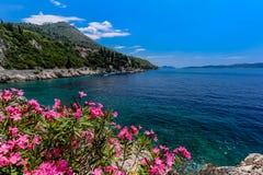 Côte adriatric bleue avec des fleurs, des montagnes et des maisons image libre de droits