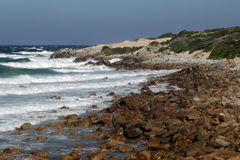 Côte au cap St Francis, Afrique du Sud Photos libres de droits
