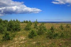 Côte baltique en été Photos libres de droits