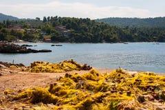Côte d'île d'Evia Image libre de droits