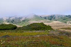 Côte de Bodega Image libre de droits