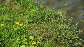 Côte de la rivière Green avec l'herbe et les fleurs Images libres de droits