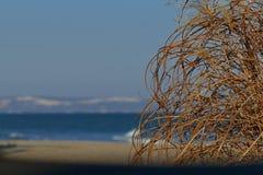 Côte de wilde de mer d'hiver banque de vidéos