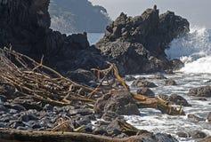 Côte raboteuse d'océan avec le bois de flottage Image libre de droits