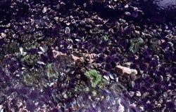 Côte Tidepool de l'Orégon Images libres de droits