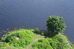 Côte verte avec l'arbre Image libre de droits