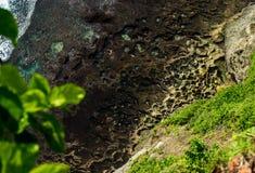 Côte volcanique Photo stock