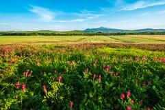 Côtes de la Toscane Photo stock