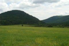 Côtes vertes en vallée de montagne Image libre de droits