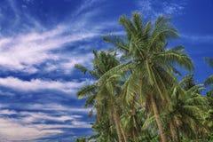 Céu bonito Vista das palmas tropicais agradáveis Conceito do feriado e das férias em Filipinas na ilha Siargao fotos de stock