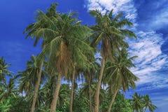 Céu bonito Vista das palmas tropicais agradáveis Conceito do feriado e das férias em Filipinas na ilha Siargao imagens de stock
