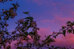 C?u dram?tico no por do sol Nuvens vermelhas do cúmulo na noite A silhueta dos ramos de árvore no primeiro plano brilhante fotos de stock