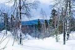 33c ural χειμώνας θερμοκρασίας της Ρωσίας τοπίων Ιανουαρίου Εθνικό πάρκο Taganay, Ρωσία Στοκ Φωτογραφία