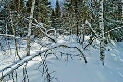 33c ural χειμώνας θερμοκρασίας της Ρωσίας τοπίων Ιανουαρίου Εθνικό πάρκο Taganay, Ρωσία Στοκ Φωτογραφίες