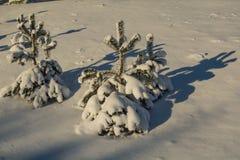 33c ural χειμώνας θερμοκρασίας της Ρωσίας τοπίων Ιανουαρίου ημέρα ηλιόλουστη Χειμερινή πτώση Τα φωτεινά χρώματα Απλό τοπίο Χειμερ Στοκ Φωτογραφία