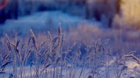 33c ural χειμώνας θερμοκρασίας της Ρωσίας τοπίων Ιανουαρίου καλυμμένα όρη σπιτιών ελβετικά χειμερινά δάση χιονιού σκηνής μικρά απόθεμα βίντεο