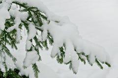 33c ural χειμώνας θερμοκρασίας της Ρωσίας τοπίων Ιανουαρίου καλυμμένα δέντρα χιονιού Στοκ φωτογραφία με δικαίωμα ελεύθερης χρήσης