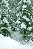 33c ural χειμώνας θερμοκρασίας της Ρωσίας τοπίων Ιανουαρίου καλυμμένα δέντρα χιονιού Στοκ φωτογραφίες με δικαίωμα ελεύθερης χρήσης