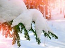 33c ural χειμώνας θερμοκρασίας της Ρωσίας τοπίων Ιανουαρίου καλυμμένα δέντρα χιονιού Στοκ Εικόνες