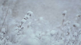 33c ural χειμώνας θερμοκρασίας της Ρωσίας τοπίων Ιανουαρίου Οι Μπους και χλόη στο χιόνι απόθεμα βίντεο