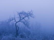 33c ural χειμώνας θερμοκρασίας της Ρωσίας τοπίων Ιανουαρίου