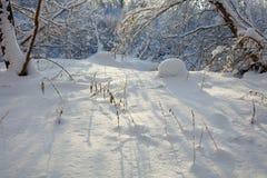 33c 1月横向俄国温度ural冬天 许多雪和霜,冷的早晨 免版税库存图片