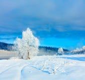 33c 1月横向俄国温度ural冬天 许多雪和霜,冷的早晨 图库摄影