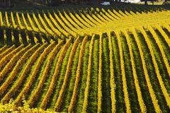 A van passing by a vineyard in the Hills. A van driving through a country road passing by a vineyard in golden autumn color, taken in Adelaide Hills wine region Stock Image