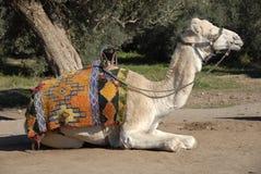 C4marraquexe, Marrocos Fotos de Stock