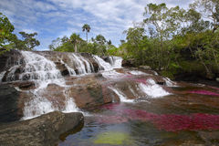 Caño Cristales,其中一条最美丽的河在世界上 免版税库存照片