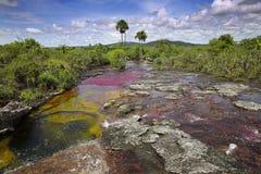 Caño Cristales, одно из самых красивых рек в мире Стоковое фото RF