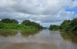 Caño-Schwarze-wilder Leben-Schutz Costa Rica Stockbild