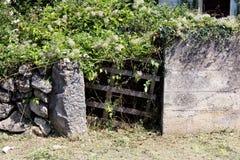 Całkowicie przerastający improwizujący podwórko drewniani drzwi robić drewniany barłóg otaczający z tradycyjnym kamieniem i beton zdjęcia stock