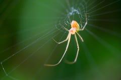 Caça da aranha para o café da manhã Fotografia de Stock Royalty Free