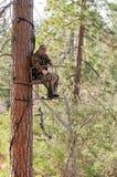 Caça de um suporte da árvore foto de stock