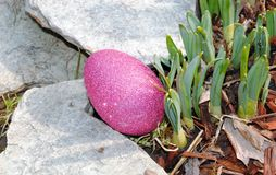 Caça do ovo da páscoa Imagem de Stock Royalty Free