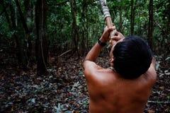 Caça tribal de Binan Tukum da pessoa idosa com seu filho para macacos na floresta úmida imagens de stock