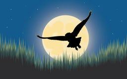 Caçador da noite da coruja Fotografia de Stock Royalty Free