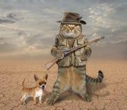 Caçador do gato com cão 3 fotos de stock