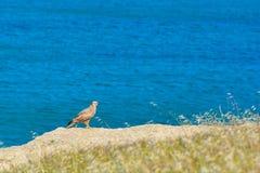 Caçador na costa de mar Imagem de Stock